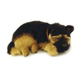 Precious Petzzz - German Shepherd