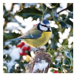 RSPB Small Square Christmas Card Pack - Perch Perfect