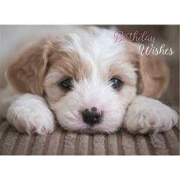 Animal Birthday Card - Cute Pup