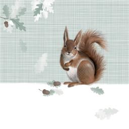 RSPB Nature Trail Card - Red Squirrel
