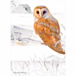Notecard Pack - Owl