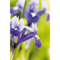 Easter Card Pack (Mini) - Purple Iris