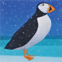 RSPB Small Square Christmas Card Pack - Perfect Puffins