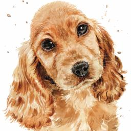 Puppy Dog Eyes Card Collection - Cocker Spaniel Copper