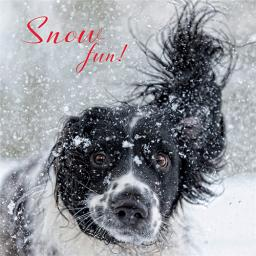 Charity Christmas Card Pack - Snowy Spaniel
