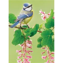 Animal Blank Card - Blue Tit On Blossom