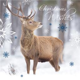 Charity Christmas Card Pack - Snowy Stag
