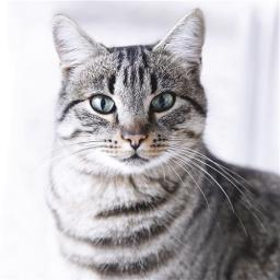 Cats Protection Card - Tabby Cat