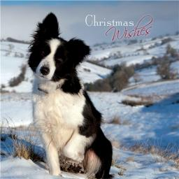 Charity Christmas Card Pack - Border Collie Snow Time Companion