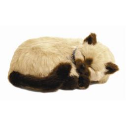 Precious Petzzz - Siamese Cat