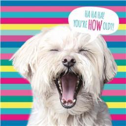 Pet Pawtrait Card - Stripey Dog (Birthday Card)
