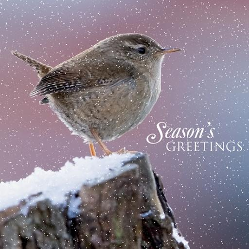 RSPB Small Square Christmas Card Pack - Winter Wren