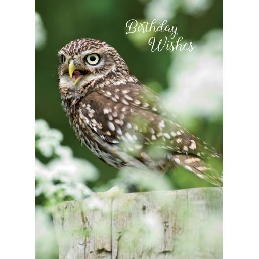 Animal Birthday Card - Little Owl