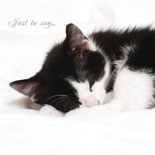 Cats Protection Card - Cat Nap