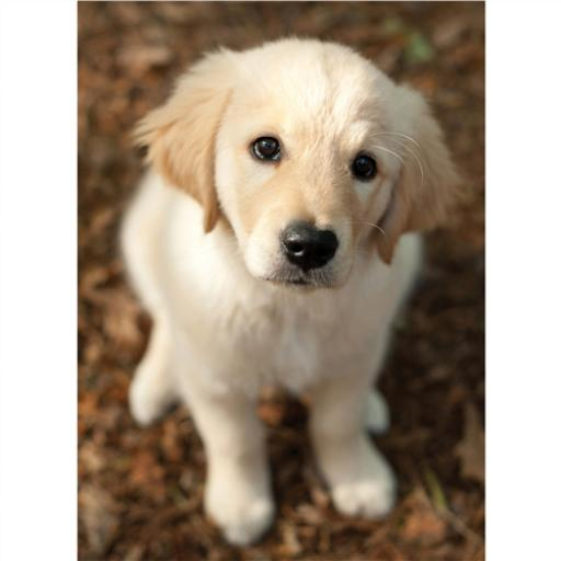 Animal Blank Card - Puppy Looking Up