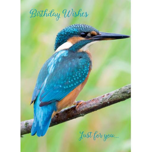 Animal Birthday Card - Kingfisher