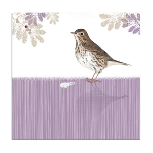 RSPB Nature Trail Card - Song Thrush