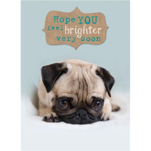 Get Well Soon Card - Cute Pug