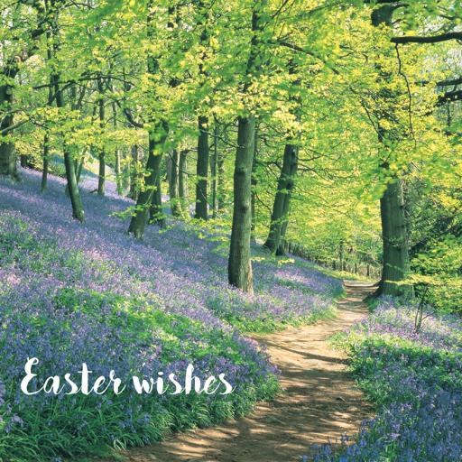Easter Card Pack - Bluebell Woods