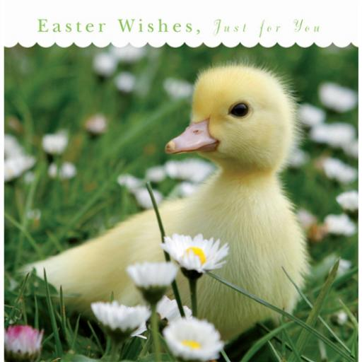 Easter Card Pack - Duckling