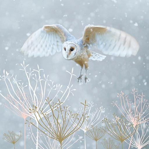 RSPB Small Square Christmas Card Pack - Christmas Eve Flight