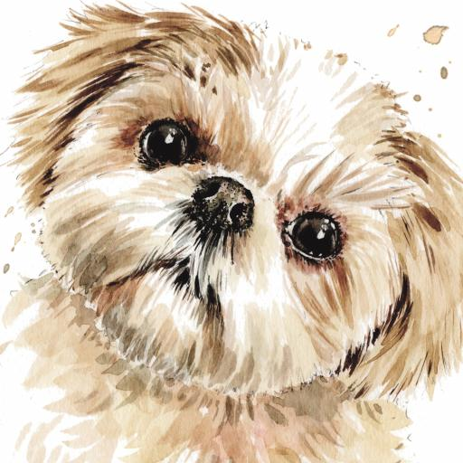Puppy Dog Eyes Card Collection - Shih Tzu Smudge