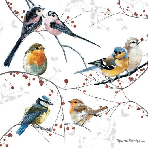 RSPB Small Square Christmas Card Pack - Festive Gathering