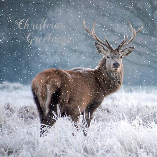 RSPB Small Square Christmas Card Pack - Snowy Stag