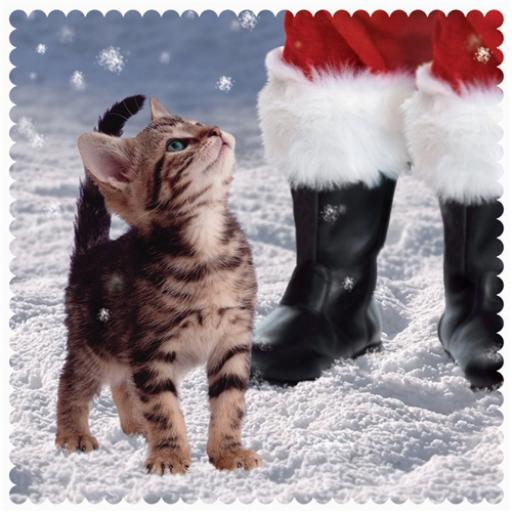 Charity Christmas Card Pack - Kitten Looking Up At Santa