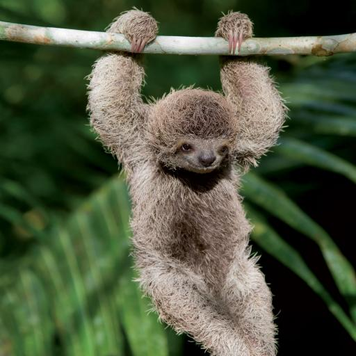 Caught On Camera Card Collection - Baby Sloth Hangin' Around