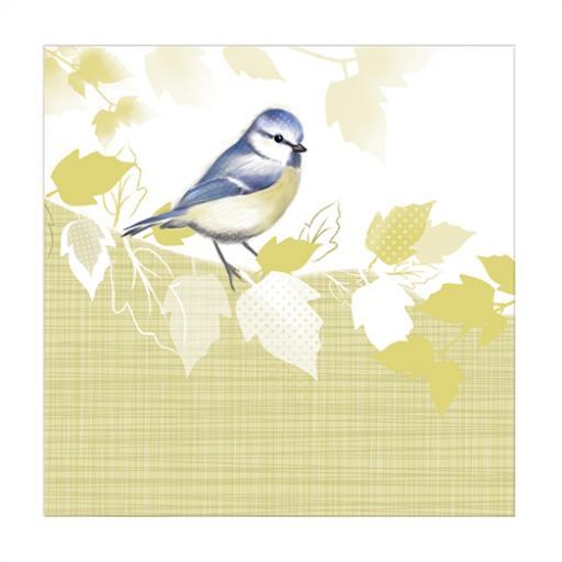 RSPB Nature Trail Card - Blue Tit