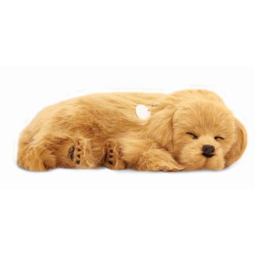 Precious Petzzz - Golden Retriever