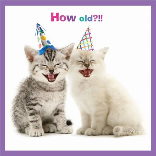 Pet Pawtrait Card - Laugh Yourself Silly (Birthday Card)