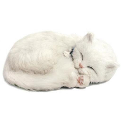 Precious Petzzz - White Short haired Cat