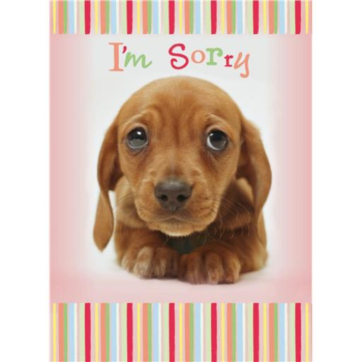 Sorry Card - Puppy