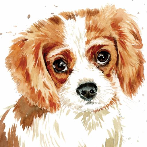Puppy Dog Eyes Card Collection - Cavalier King Charles Charlie