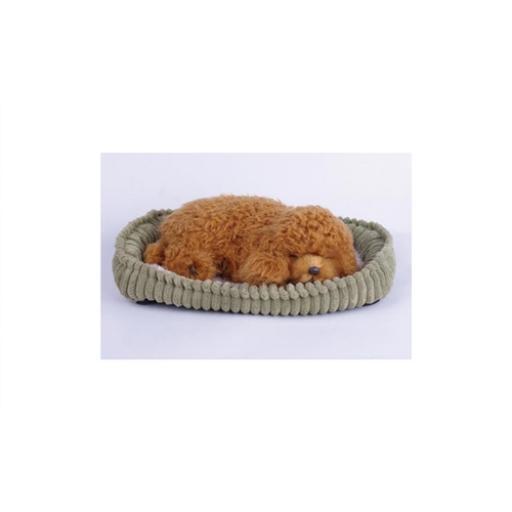 Precious Petzzz - Toy Poodle