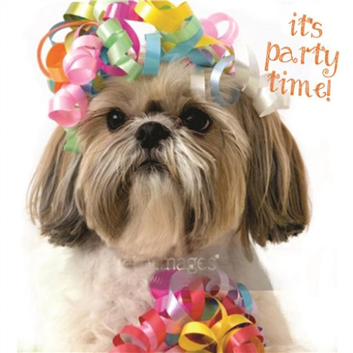 Pet Pawtrait Card - It's Party Time (Blank Card)