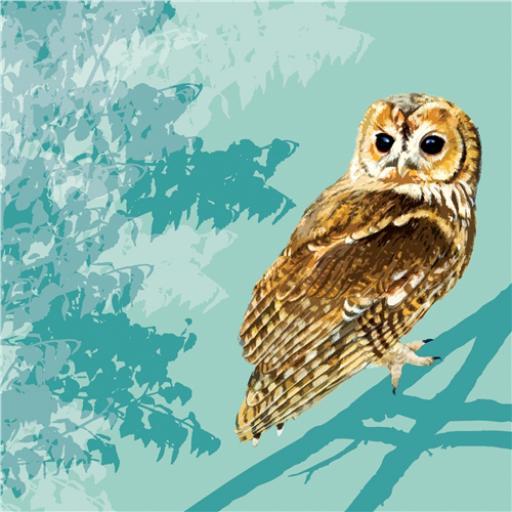 RSPB Card - Tawny Owl