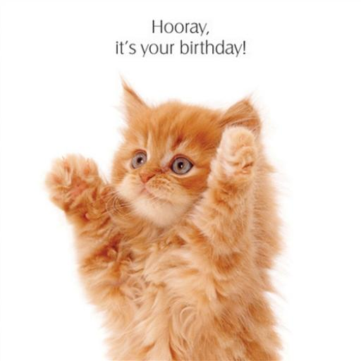 Pet Pawtrait Card - Big Hug! (Birthday Card)