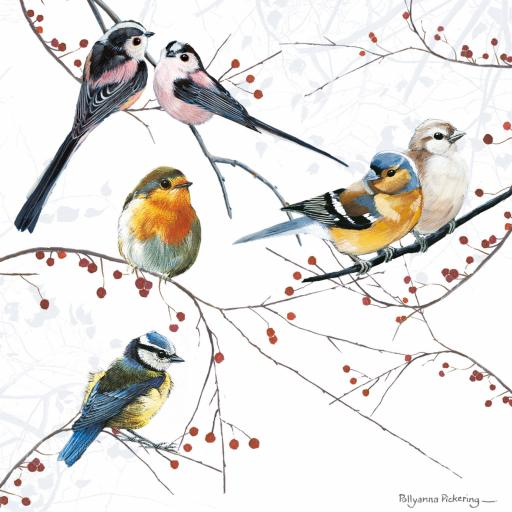 Countryside Collection Card - Mixed Birds