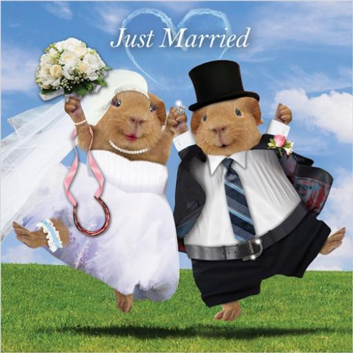 Crazy Crew Card - Just Married (Wedding)
