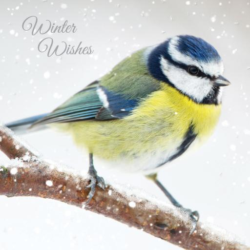 RSPB Small Square Christmas Card Pack - Winter Watch