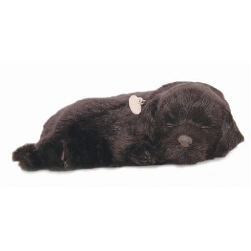 Precious Petzzz - Black Labrador