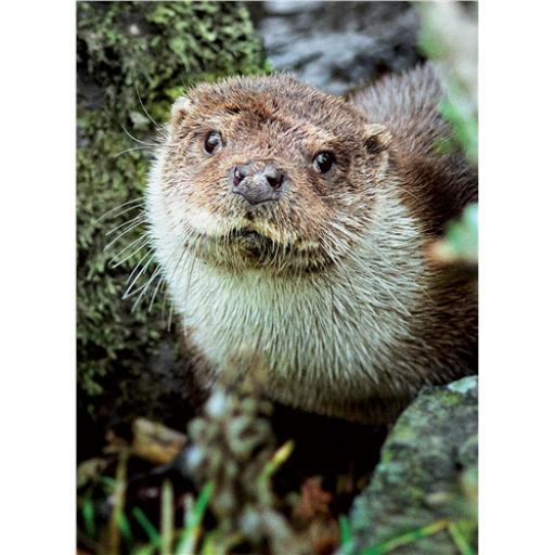 Animal Blank Card - Otter