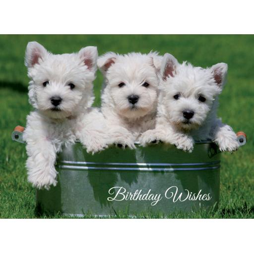 Animal Birthday Card - Trio Of Westie Pups