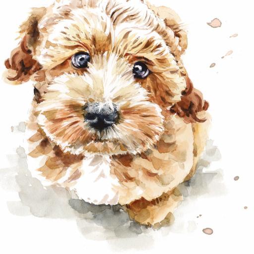 Puppy Dog Eyes Card Collection - Cockapoo Coco