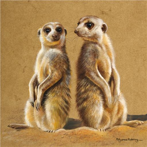 Pollyanna Pickering Collection - Meerkats