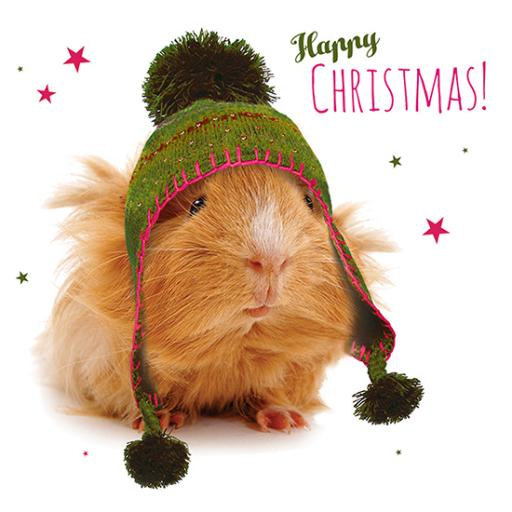 Charity Christmas Card Pack - Cozy Guinea Pig