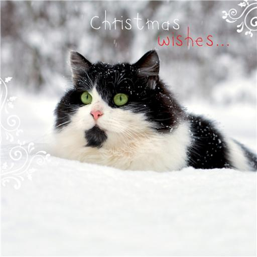 Charity Christmas Card Pack - Bright Eyes
